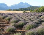 La Provence, un entorno que inspira